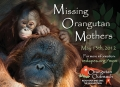 ng Orangutan Mothers 2012 Campaign Video (Baby Orangutan Bonanza!) - YouTube