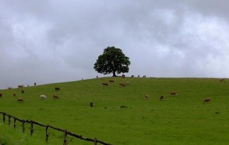 tree_on_farm